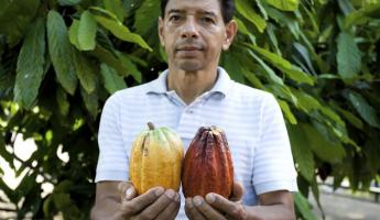 Chocolate farmer holding cocoa pods