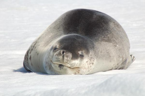A seal sunbathes along the waters