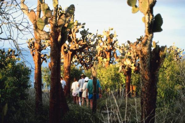 Hiking through cacti in the Galapagos