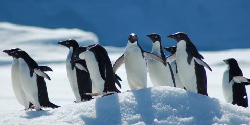 The penguins line up as you cruise by