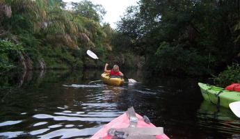 Kayaking through the Costa Rican rainforest