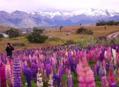 Adventures in Patagonia! Beautiful wildflower fields