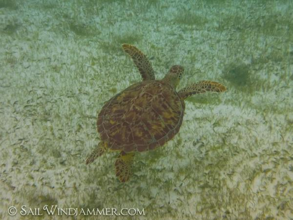 Swimming with the turtles in the Caribbean
