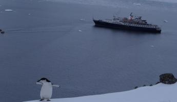 Chinstrap Penguin and Sea Adventurer