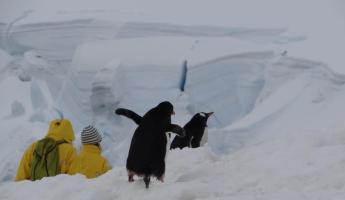 Hikers with Penguins