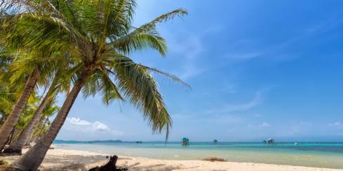 Coconut tree on the sea Phu Quoc
