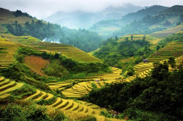 Terraced rice field in Northwest of Vietnam