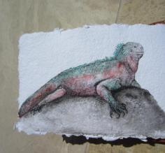 acrylic painting of the marine iguana on Espanosa