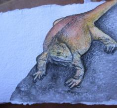 acrylics and colored pencil, land iguana