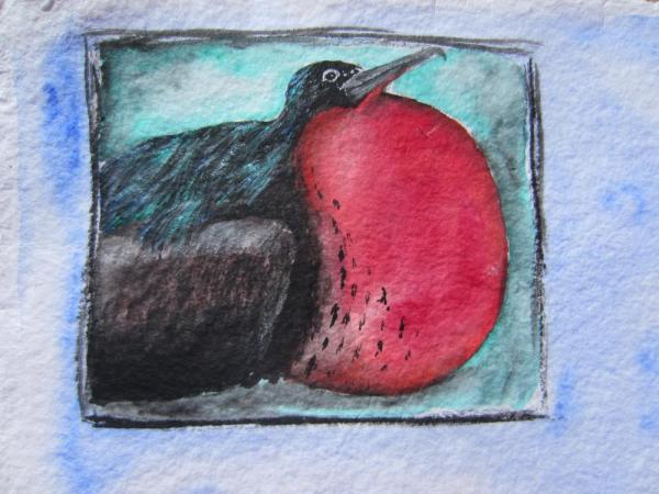 acrylics, colored pencil, frigate bird