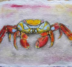 acrylics, Sally Lightfoot crab
