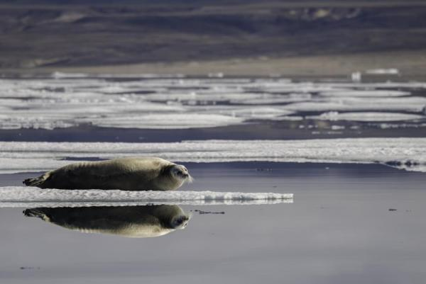 A seal and its mirror reflection