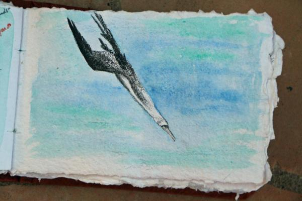 diving booby, acrylics and colored pencil