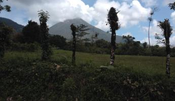 First look at Arenal