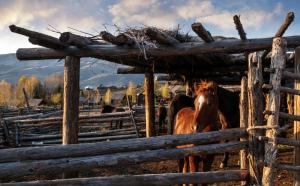 Horses at an estancia