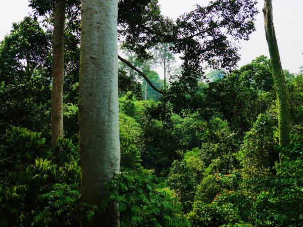 Borneo's lowland dipterocarp forest