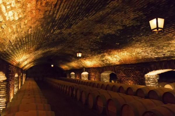 Tour local wine cellars