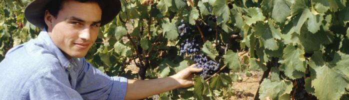 Personal tours of vineyards