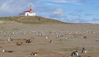 Magdalena Island lighthouse and penguin colony