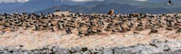 Wildlife on Beagle Channel, Tierra del Fuego