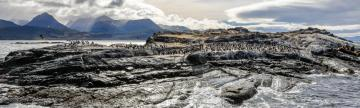 Island of seals & sea lions, Beagle Channel