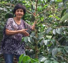 Marleni showing off her organic coffee plants