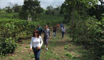 Hiking in a coffee farm