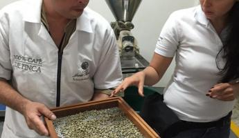 Inspecting coffee beans before roasting