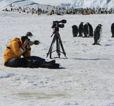 Photographing the penguins