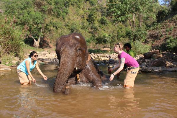 Elephant Bath Time!