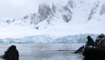 Up close and personal in Antarctica