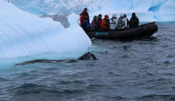 Leopard Seal take down, Antarctica