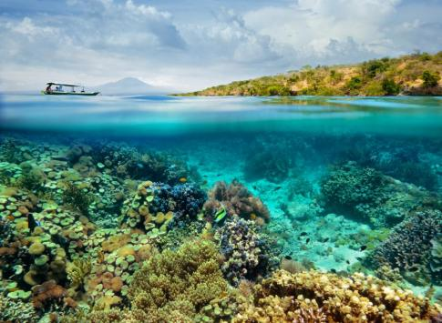 Coral reef on the island of Menjangan, Indonesia
