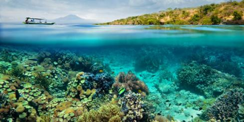 Snorkel the coral reefs of Indonesia
