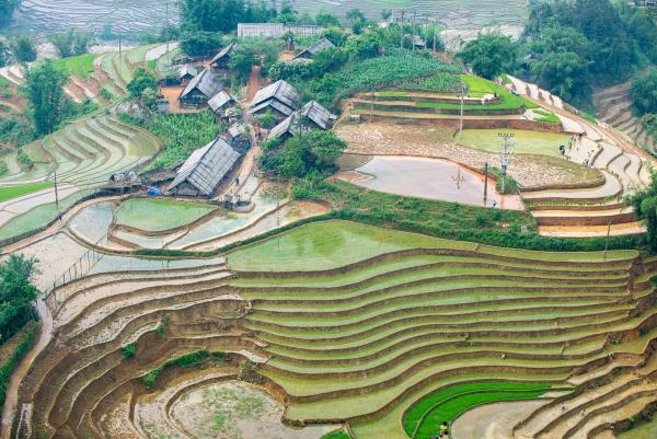 Rice paddy terraces during planting season