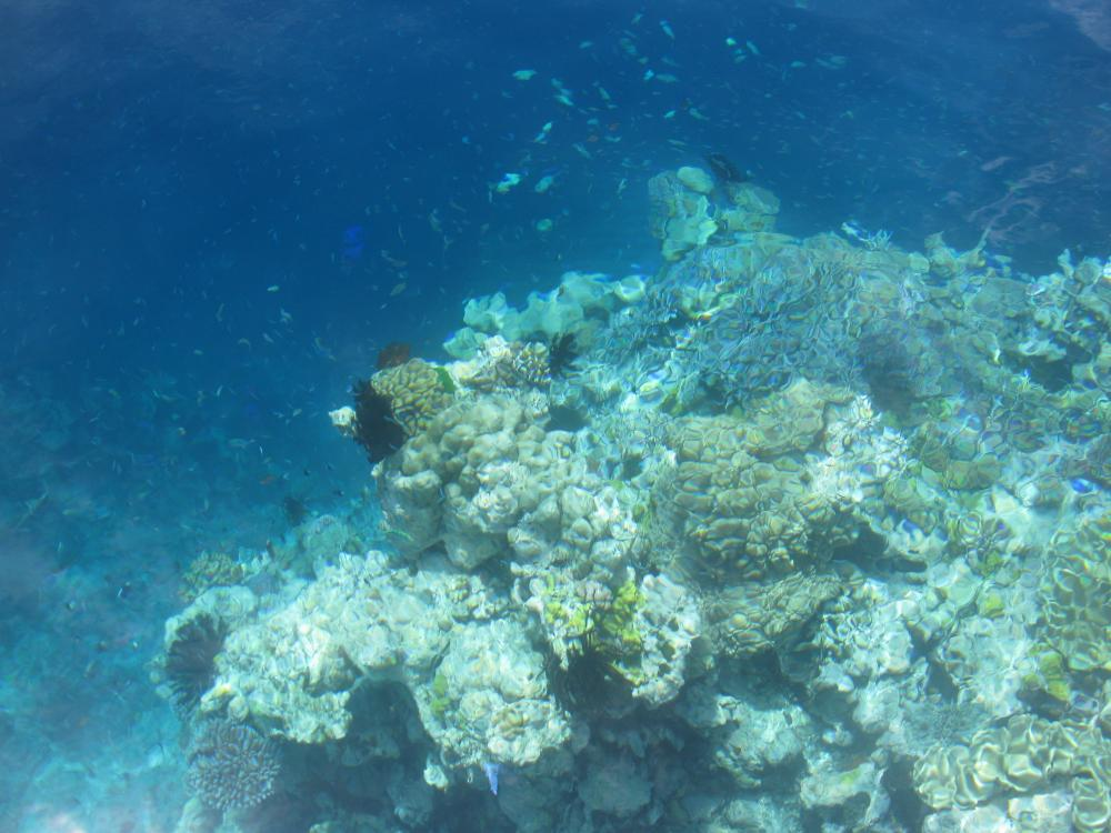 Barrier Reef Traveller