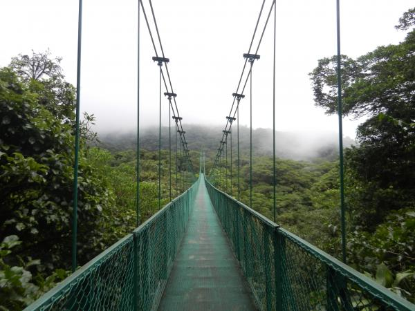 Misty ridges in the cloud forest