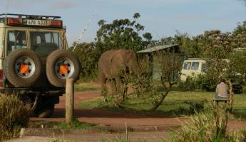 This elephant decided to talk a walk into the grounds of our lodge