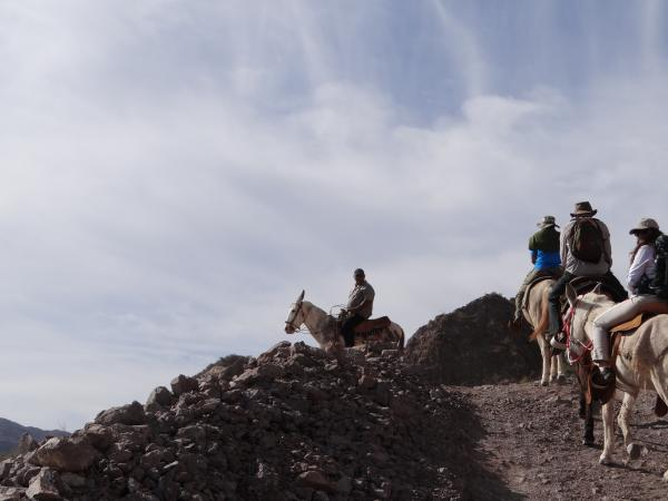 Riding Burros in Baja
