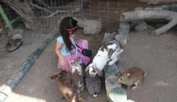 Rescued Bunnies at Serpentarium La Paz