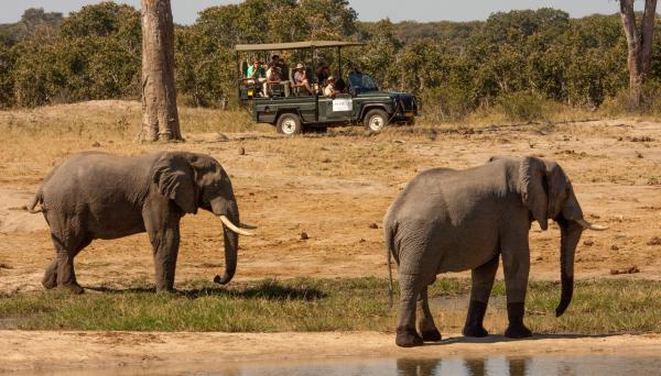 Spotting the giants on safari at Zambezi Sands