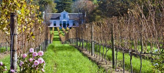Cape Dutch homestead and vineyard