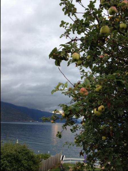 Apple trees all around Balestrand