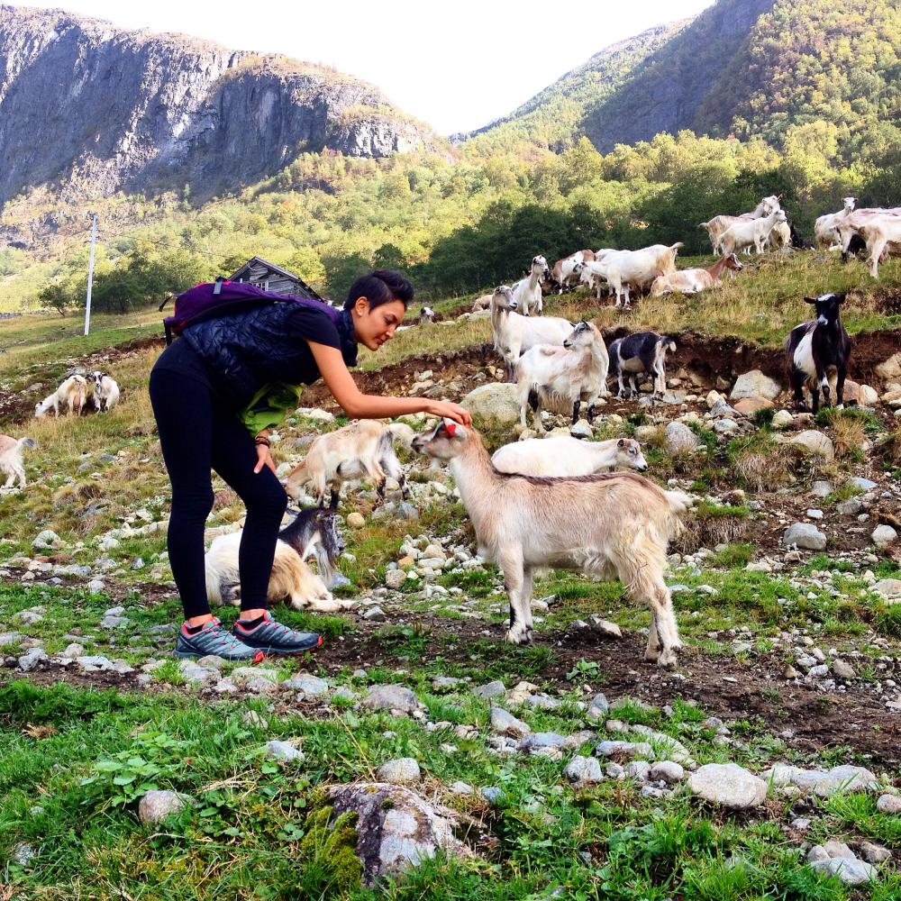 Hike up to a goat farm by the Sognefjord