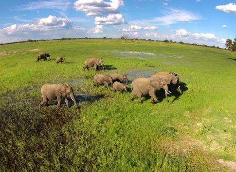 Ngamo Plains in wet season