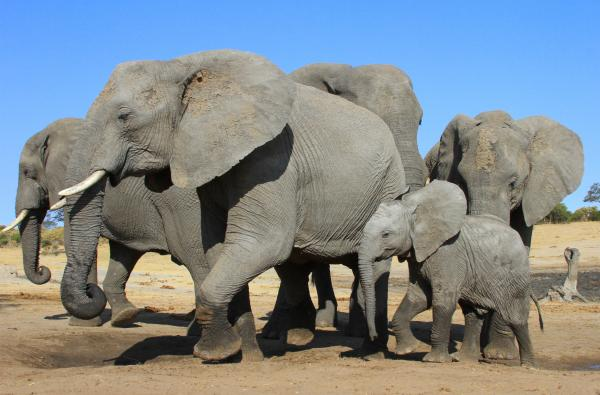 Elephants pour into the watering hole
