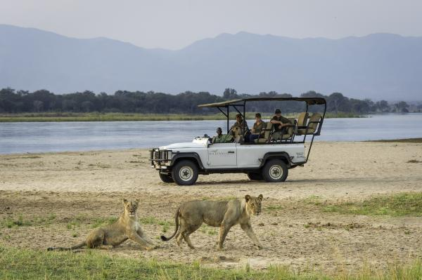 Lions spotted at Mana Pools
