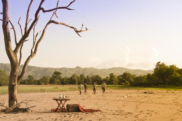 Guided walking safaris