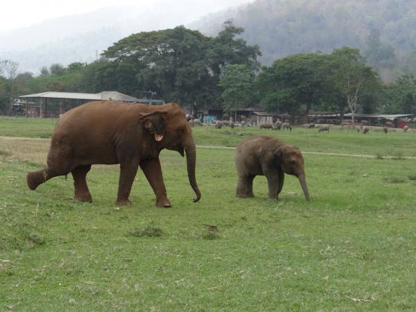 Elephant Sanctuary, Chiang Mai