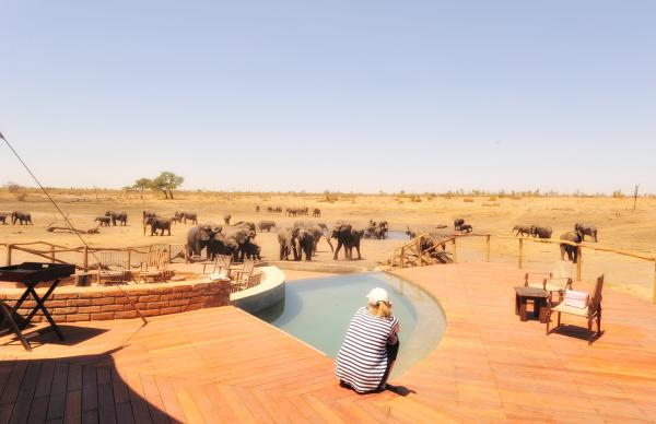Watching elephants at the pool